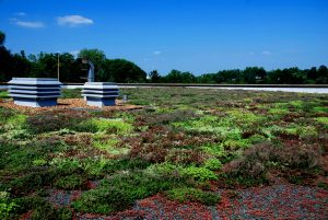 Greenroof Albemarle Co